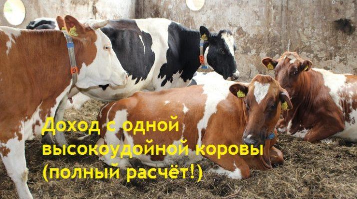 Доход с одной высокоудойной коровы