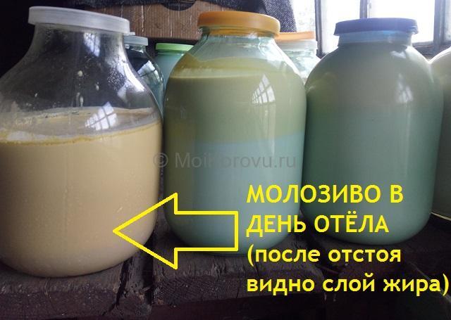 Слева направо - первое молозиво, молозиво второй дойки и молозиво на следующий день. Очень очевидно, как меняется цвет и жирность.