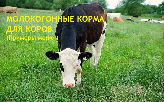 Молокогонные корма для повышения удоев с примерами меню в зависимости от количества молока