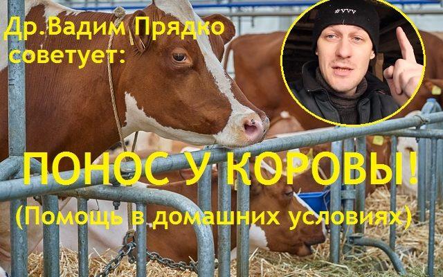 Понос у коровы - как помочь в домашних условиях. Симптоматическое лечение. Тревожные сигналы